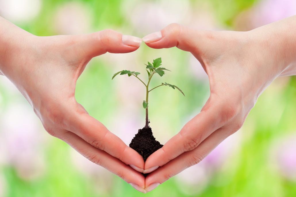 Hände, die ein Herz formen, halten eine junge Pflanze